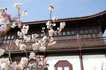実は桜ですよ♪